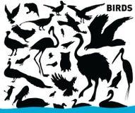 Conjunto de pájaros Imágenes de archivo libres de regalías