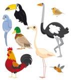 Conjunto de pájaros Fotografía de archivo