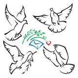 Conjunto de palomas Foto de archivo libre de regalías