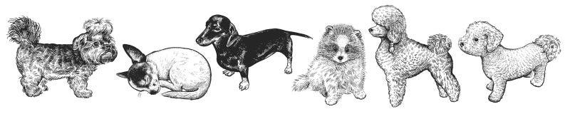 Conjunto de perritos lindos Animales domésticos caseros aislados en el fondo blanco Foto de archivo libre de regalías