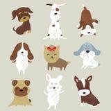 Conjunto de perros lindos fotos de archivo