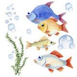 Conjunto de pescados Fotos de archivo libres de regalías