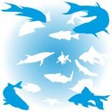Conjunto de pescados Fotografía de archivo libre de regalías