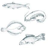 Conjunto de pescados Imágenes de archivo libres de regalías