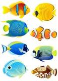 Conjunto de pescados tropicales Foto de archivo