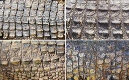 Conjunto de piel del cocodrilo imagen de archivo libre de regalías