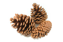 Conjunto de Pinecone fotos de stock royalty free