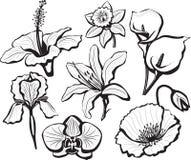 Conjunto de pistas de flor