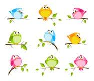 Conjunto de pájaros lindos Imagenes de archivo
