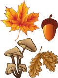 Conjunto de plantas del otoño Fotos de archivo