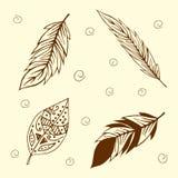 Conjunto de plumas de pájaro Foto de archivo libre de regalías