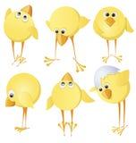 Conjunto de polluelos Imagen de archivo