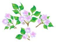 Conjunto de ramificaciones del flor. ilustración del vector