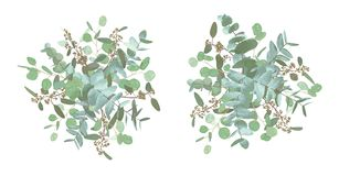 Conjunto de ramos de la boda Floral elegante, verdor, colección asimétrica Ramo de espiral del eucalipto, populus, robusta todos ilustración del vector
