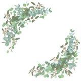 Conjunto de ramos de la boda Floral elegante, verdor, colección del semicírculo Ramo de espiral del eucalipto, populus, robusta t ilustración del vector