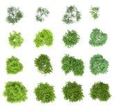 Conjunto de árboles de hojas caducas Imagen de archivo libre de regalías