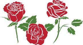 Conjunto de rosas Imágenes de archivo libres de regalías