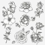 Conjunto de Rose