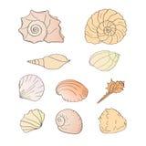 Conjunto de shelles Fotografía de archivo libre de regalías