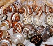 Conjunto de shelles del mar Fotografía de archivo libre de regalías