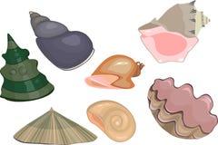 Conjunto de shelles del mar Imagen de archivo