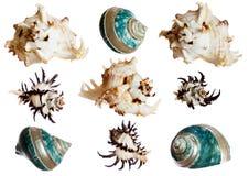 Conjunto de shelles espirales Foto de archivo libre de regalías