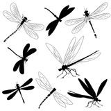 Conjunto de siluetas de libélulas, tatuaje Imagen de archivo libre de regalías