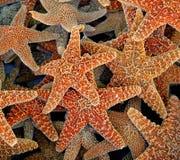 conjunto de starfish Imagens de Stock Royalty Free