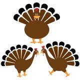Conjunto de Turquía de la acción de gracias Imagen de archivo