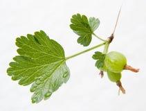 Conjunto de um gooseberry verde Imagens de Stock