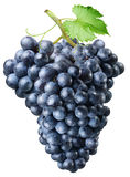 Conjunto de uvas Fotografia de Stock