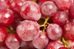 Conjunto de uvas deliciosas Imagens de Stock Royalty Free