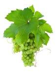 Conjunto de uvas maduras, verdes. Imagem de Stock