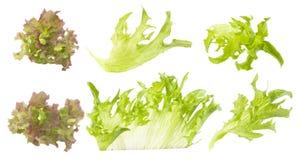 Conjunto de verde y hojas coloreadas de la lechuga Imagen de archivo libre de regalías