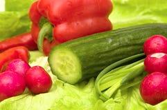 Conjunto de verduras frescas Foto de archivo libre de regalías