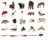 Conjunto del animal Foto de archivo libre de regalías