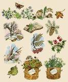 Conjunto del bosque stock de ilustración