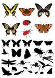 Conjunto del cuadro del silhouette& del insecto Imágenes de archivo libres de regalías