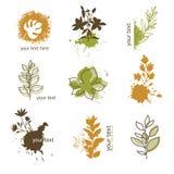 Conjunto del elemento floral