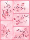 Conjunto del flor de cereza ilustración del vector