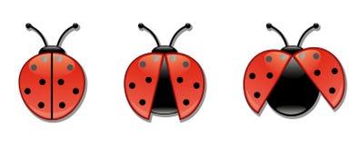Conjunto del icono de los Ladybugs Fotografía de archivo libre de regalías