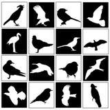 Conjunto del pájaro Foto de archivo libre de regalías