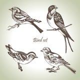 Conjunto del pájaro Imagen de archivo libre de regalías