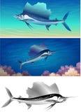 Conjunto del pez volador Fotografía de archivo libre de regalías