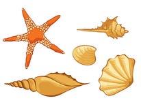Conjunto del shell Imagen de archivo libre de regalías