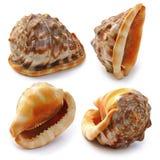 Conjunto del shell del mar Imagen de archivo libre de regalías