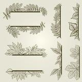 Conjunto del vector de elementos del diseño de la vendimia con las hojas Fotos de archivo libres de regalías