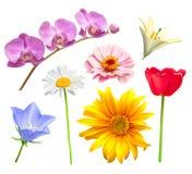 Conjunto del vector de la flor Imagen de archivo libre de regalías