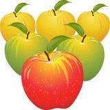 Conjunto del vector de manzanas coloridas Imagen de archivo libre de regalías
