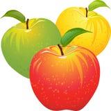 Conjunto del vector de manzanas coloridas Foto de archivo libre de regalías